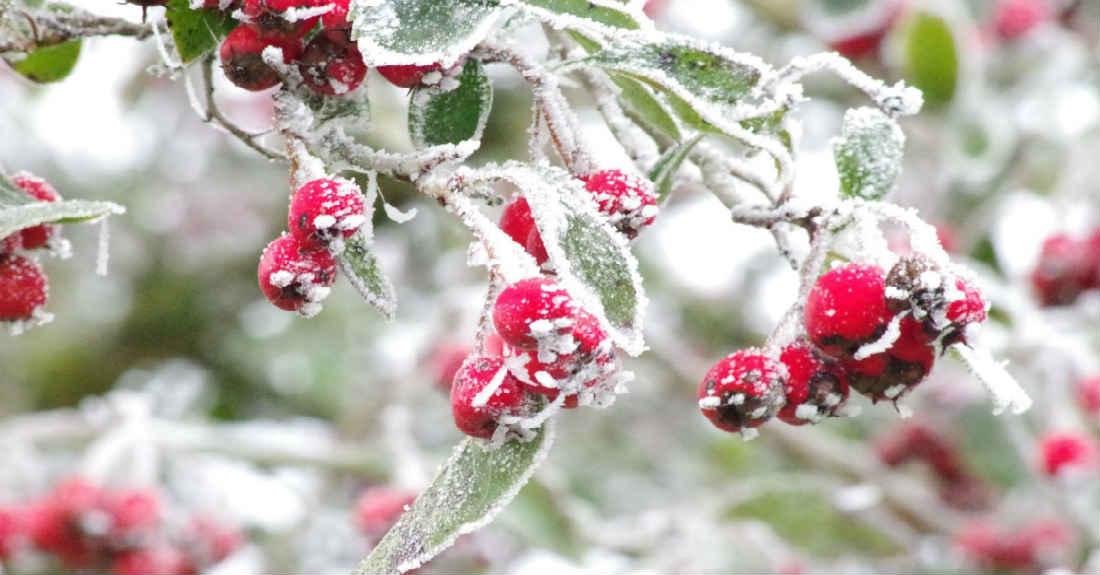 Winter Landscaping Ideas